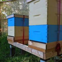 Hives at Still Creek Community Garden in Vancouver, BC by beekeeper Stephen Sandve