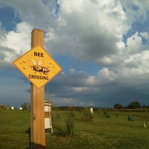 Bee Crossing. Herb Lester Apiaries, Tennessee.