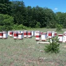 Withers Mountain Honey Farm near Mancelona MI. Photo by Jim Withers.