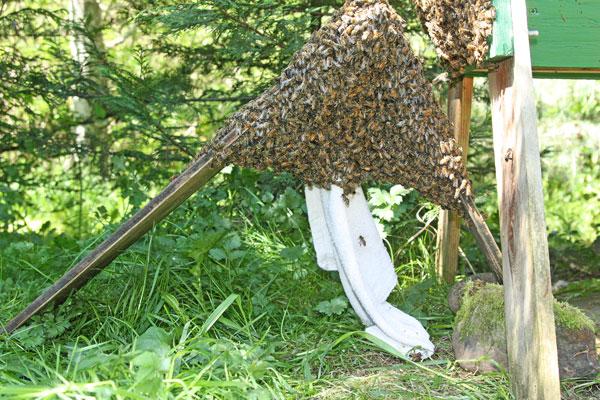 Swarm-ready-to-dump