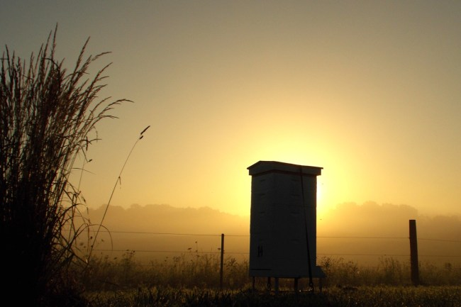 Fall-in-the-apiary