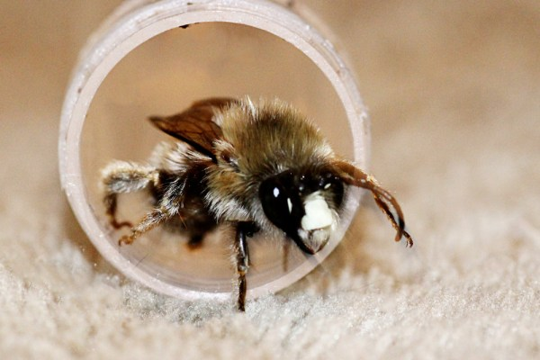 Bee_3201-Rusty-Burlew_edited-1