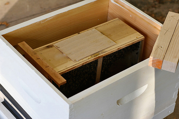 New-bees-on-new-wood-Chiot's-Run
