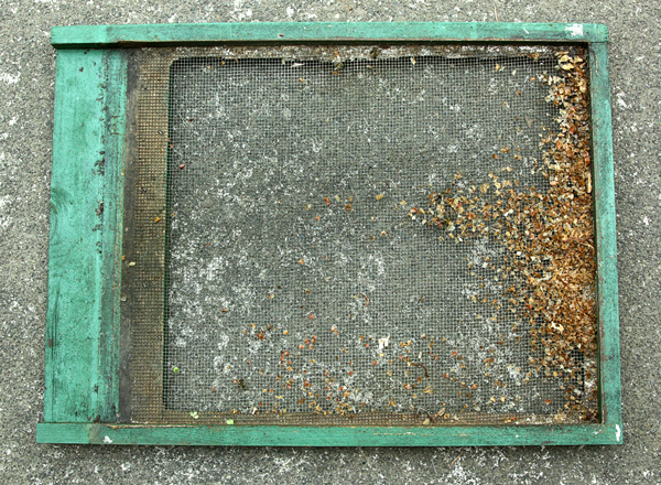 how to move honey bees