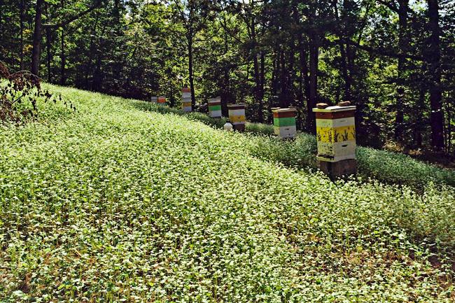 Gillispie's-bee-yard