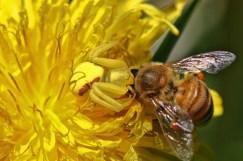 Honey bee treat.