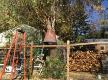 Next spring the colony and a portion of the cottonwood will be moved to Smudgie Goose Farm in Prineville, Oregon. © Naomi Price..
