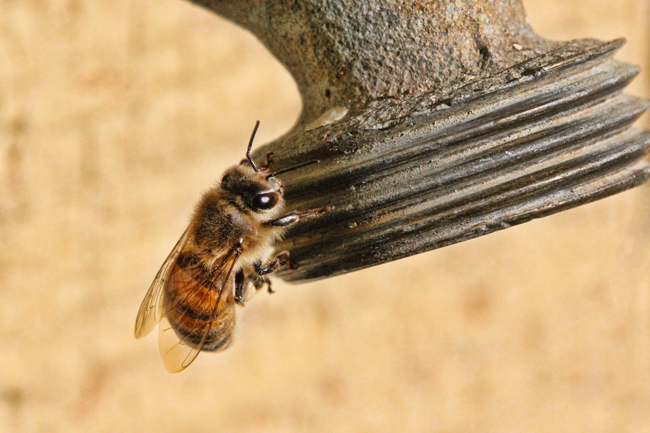 Bee-on-dry-hose-bibb