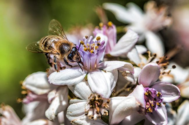 Bee-on-flower-Pixabay