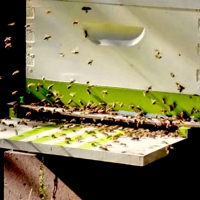 Green-hive-Carol-Nelson-650