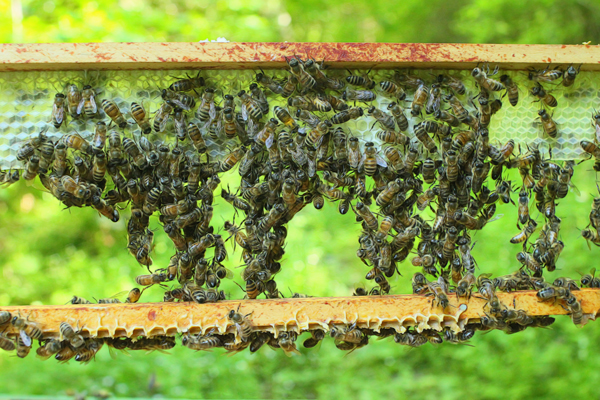 Enhance your honey production with upper entrances