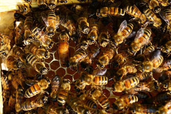 Is requeening a hive really necessary?