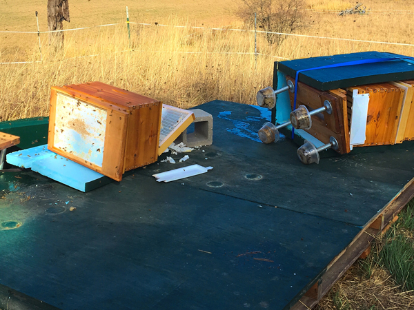 An unexpected wind topples bee hives.