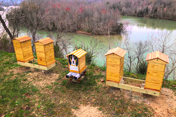 Here are the four completed hives with a Flow hive in the center.