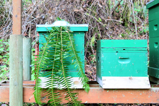 Before you move a hive, decide what you will do if it doesn't work. A hive with ferns in front of it.
