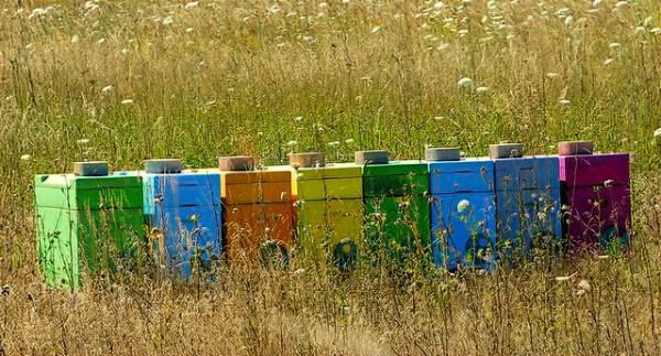 Langstroth hives dot landscapes all over the world. Although they are all similar, they are also very different.