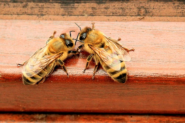 The age of beekeepers doesn't matter to the bees.