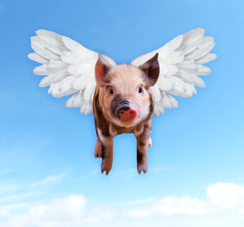 pigs-1520968_1920
