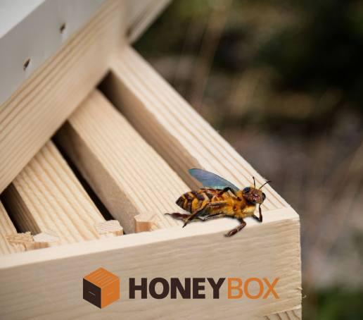 κυψέλες μέλισσας