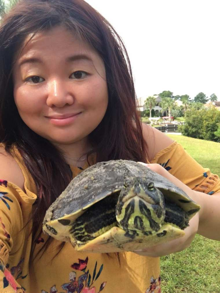 turtle quote