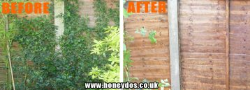 IVY REMOVAL AND JET WASHED FENCING