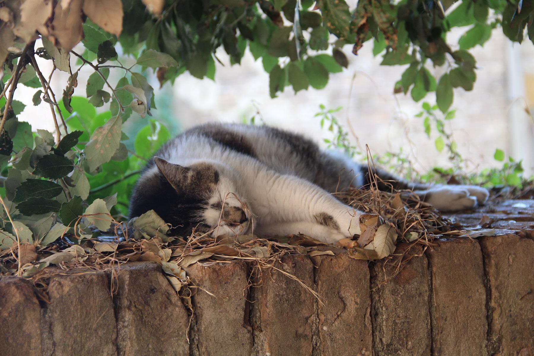 Cat dozing off