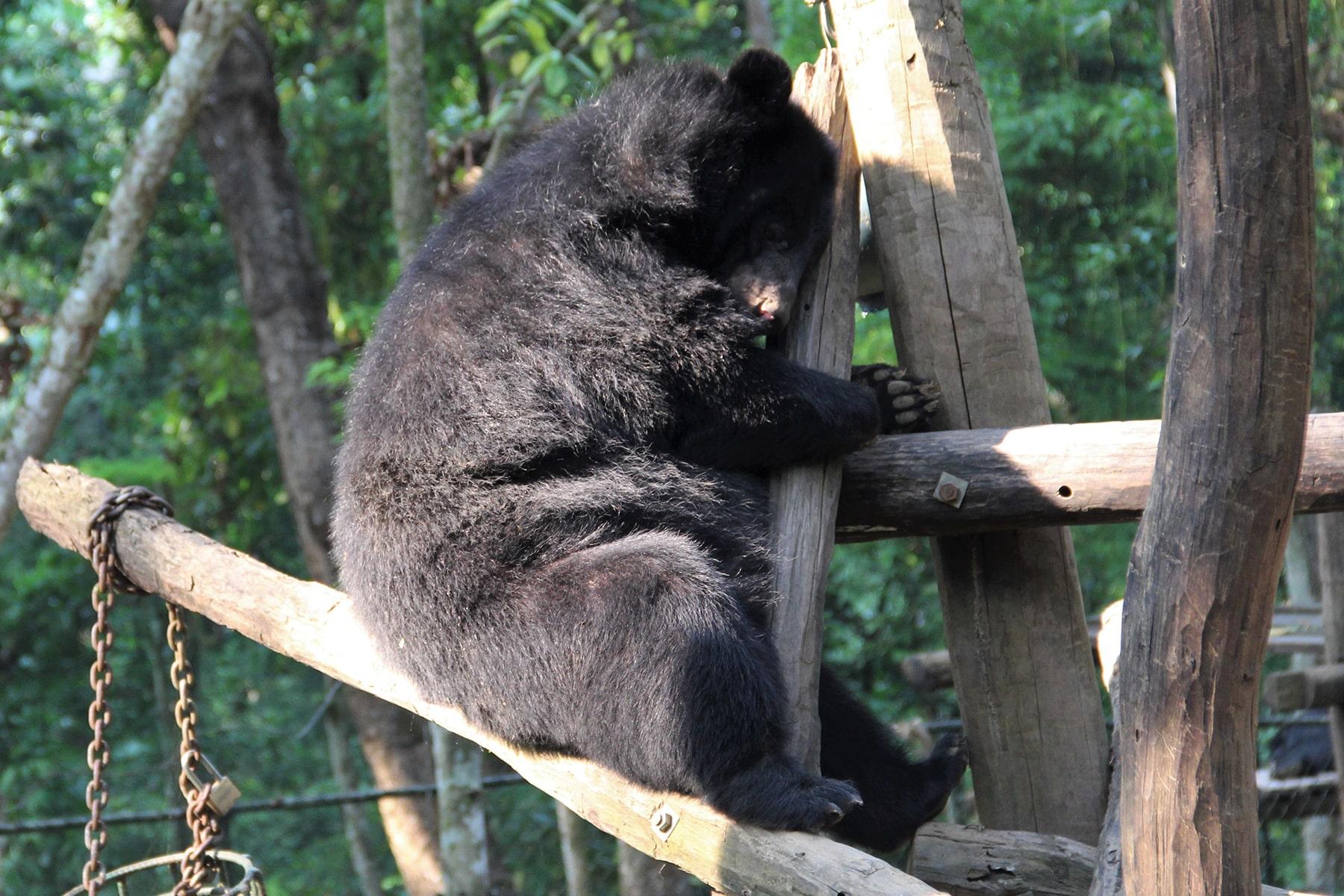 Un orsetto nel centro di salvataggio