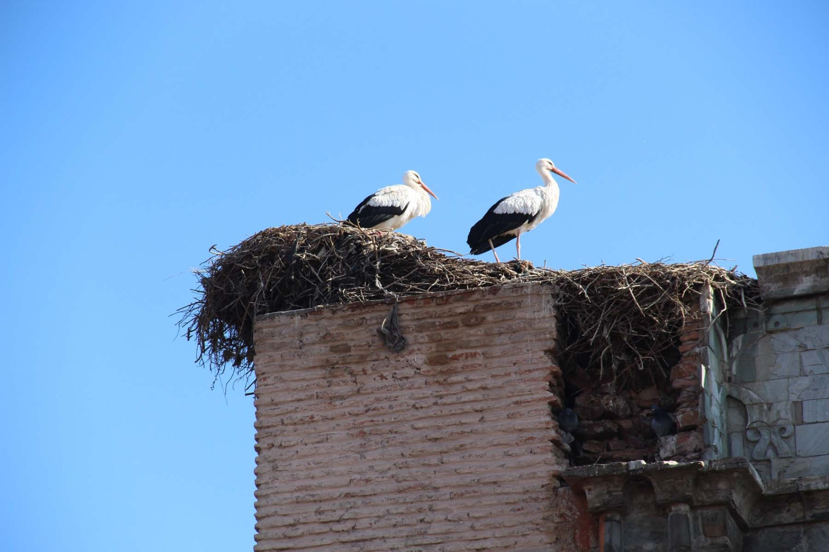 Storks on the gate Bab Agnaou in Marrakech