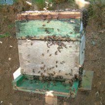 Volume of bee box