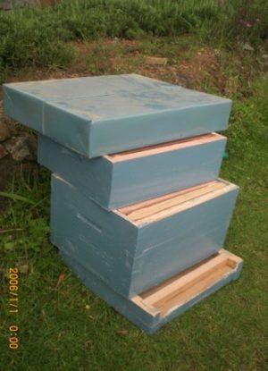 Newton Hive