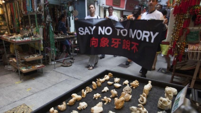elephant ivory trade