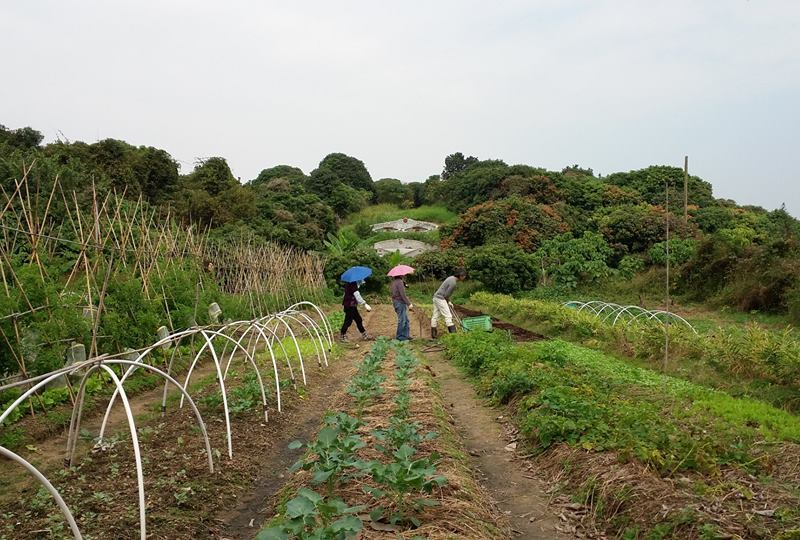 Hong Kong Farm