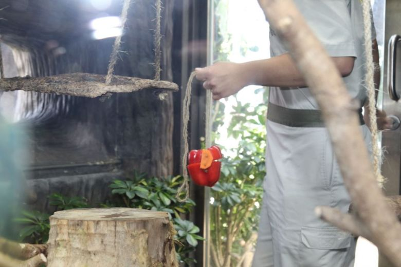 Toy for pygmy marmoset
