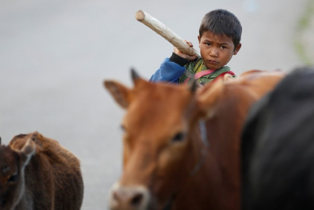 cow myanmar wa territory burma
