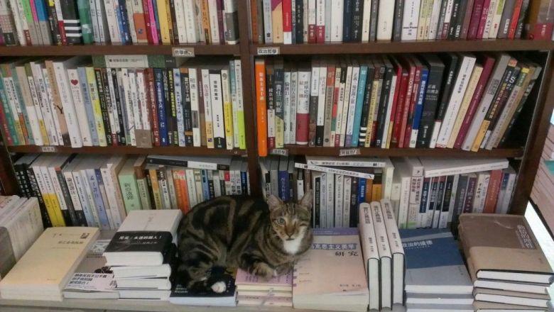 wei wei the cat hong kong readers