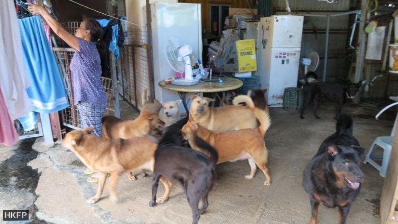 fung dog shelter