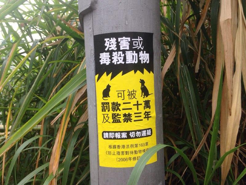 lamma dogs poisoning