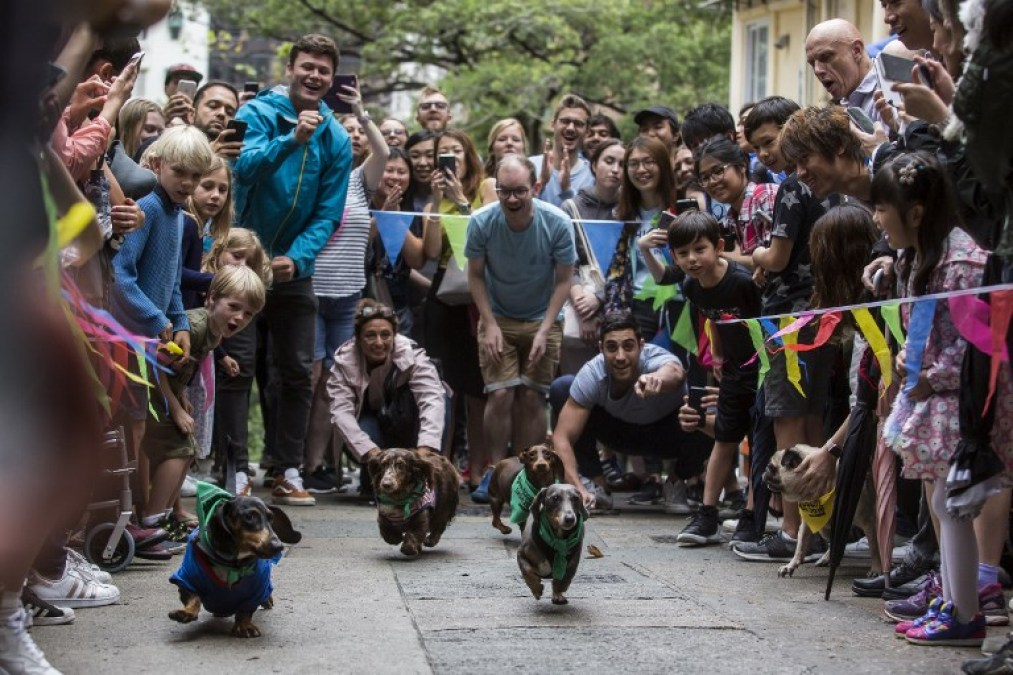 hong kong dog rescue race