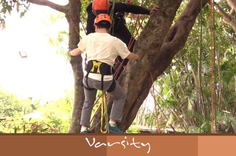 climb hong kong Tree Surgeons
