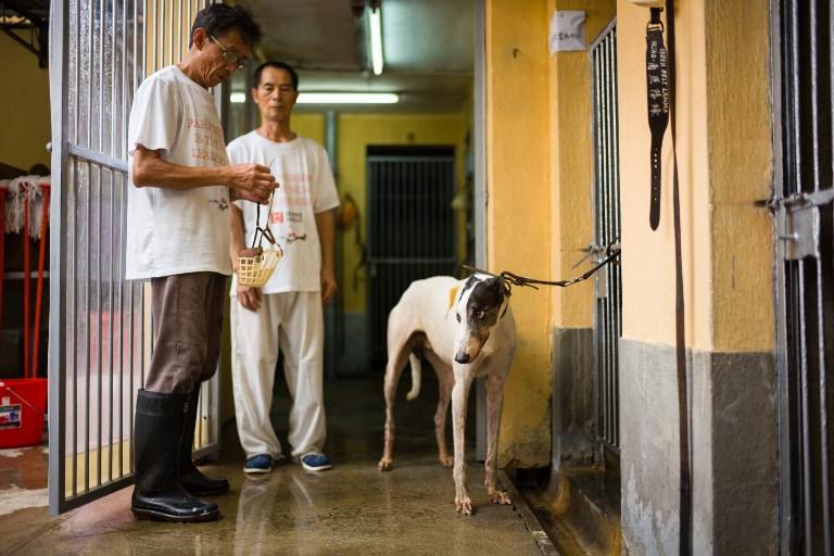 macau dogs greyhounds