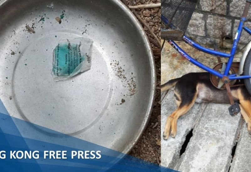 Cheung chau dog poisoning