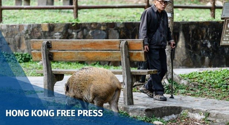 wild pig hong kong