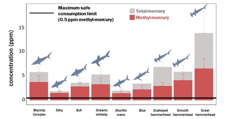 sharkfin mercury levels