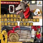 【有趣動物】 英國犬捐血6年拯救88條狗, 成狗界英雄光榮退休 !