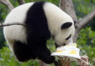 china-panda-birthday-01