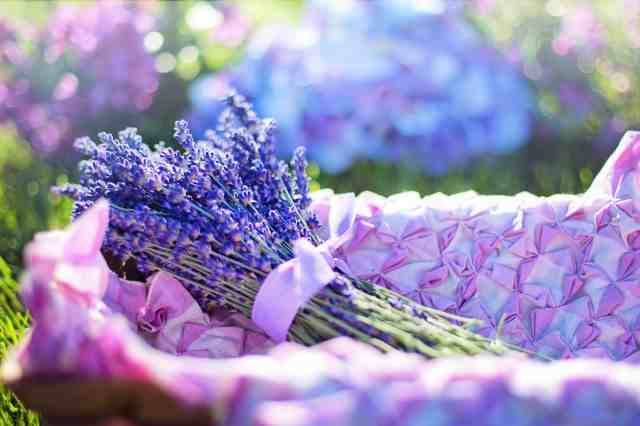 Immerse yourself in purple Lavender flowers Provence – France
