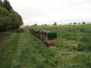 Honig-Soter 006