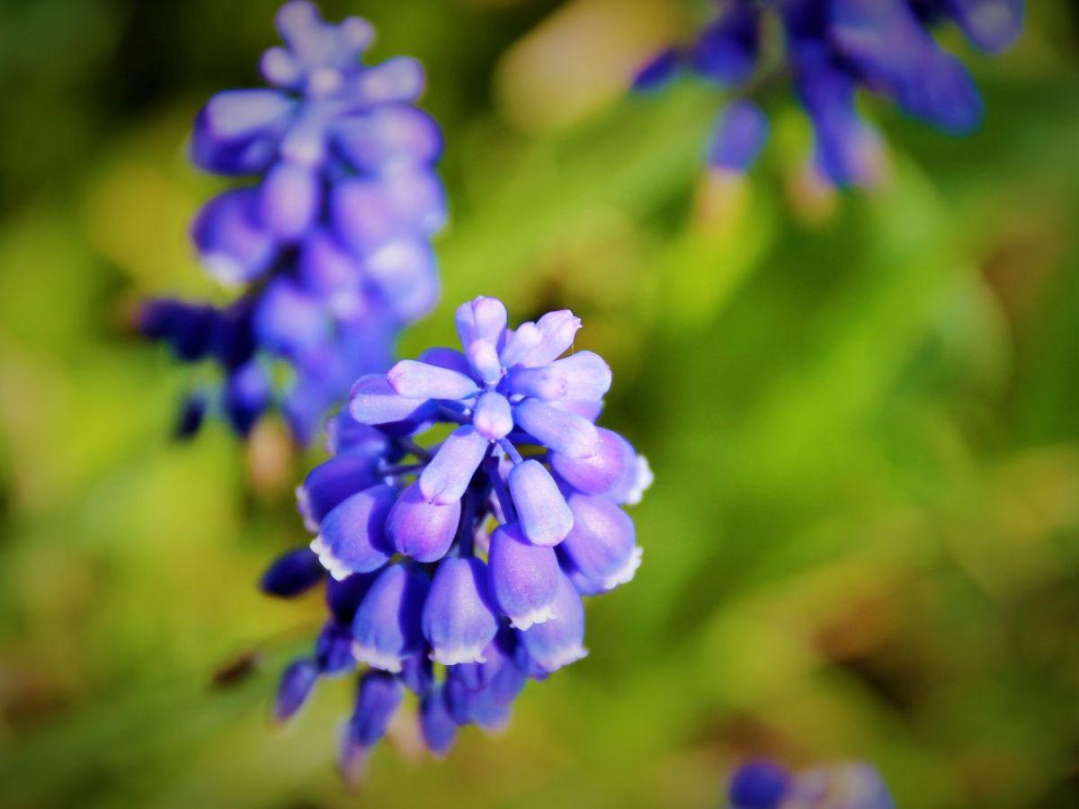 Das Imkerjahr – Jahreskalender der Bienen – Monat April