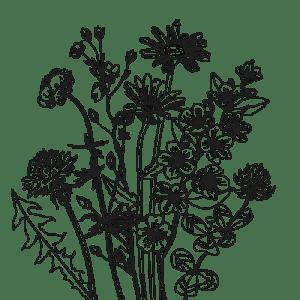 Schweizer Blütenhonig
