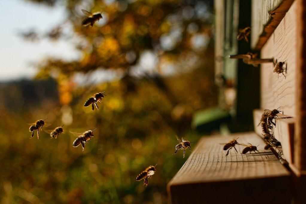 Aufstellen eines Bienenstocks